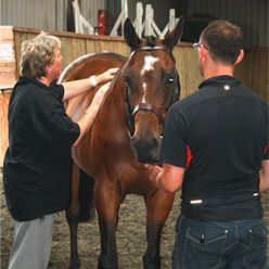 equine-therapist.jpg